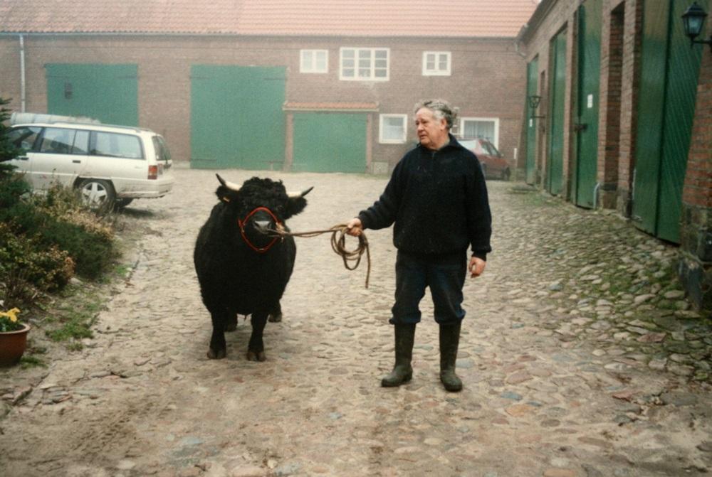 unser erster Dexterbulle: Weide Tango, geboren 1991, im Deckeinsatz 1993 bis 1996